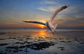Seagull Flying Stock Image - 48801651