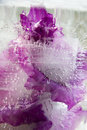 Frozen   Flower Of   Gladiolus Royalty Free Stock Images - 48810379