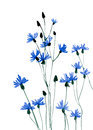 Many Blue Flowers On White Background Royalty Free Stock Photos - 48839938