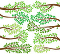 Vector Collection Of Leafy Tree Branch Silhouettes Royalty Free Stock Photos - 48869398