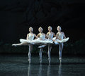 The Classic Four Little Swan Dance-The Swan Lakeside-ballet Swan Lake Royalty Free Stock Photos - 48877028