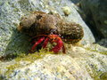 Hermit Crab Underwater With Sea Anemone On Shell Stock Photography - 48878822