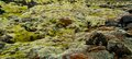 Moss On Volcanic Rocks In Iceland Royalty Free Stock Images - 48891999