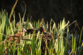 Moorhen On The Nest Stock Photo - 4891170