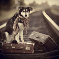 The Dog Sits On A Suitcase On Rails Stock Photos - 48909813