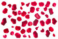 Crimson  Rose Petals Stock Photos - 48910083