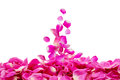 Petals Of Rose Stock Images - 48912834