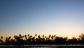 Silhouette Of Palm Trees Against Clear Sunset Sky Stock Photography - 48957942