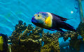 Fish That Live In The Red Sea Stock Photo - 48990030