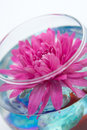 Aster In The Vase Stock Images - 4900214