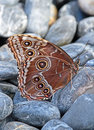 Butterfly Royalty Free Stock Images - 49002459