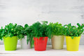 Flavoring Greens In Buckets Stock Image - 49003871