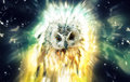 Owl, Abstract Animal Concept Stock Photography - 49015372