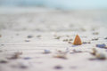 Shell On The Beach Stock Images - 49017204