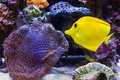Coral Reef Stock Images - 49020314