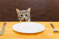 Young Cat After Eating Food From Kitchen Plate Stock Image - 49030431