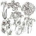 Collection Of Vector Hand Drawn Flowers Stock Photos - 49035543