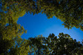 Trees And Blue Sky Stock Photos - 49038793