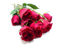 Red Roses Isolated Stock Image - 49043551