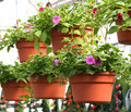 Hanging Baskets Royalty Free Stock Photography - 4913557