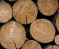 Stacked Timber Logs Royalty Free Stock Photos - 4915678
