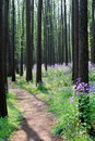 Road Into Forest Royalty Free Stock Photo - 4917835