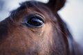 Horse Eye Detail Royalty Free Stock Photo - 49122915