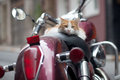 Kitten On A Vintage Red Motor Scooter Royalty Free Stock Photos - 49132848