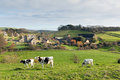 Cows Grazing And Tithe Barn In Dorset Village Of Abbotsbury England UK Royalty Free Stock Image - 49149926