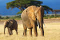Elephant Mother With Calf Stock Images - 49183284