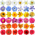 Big Selection Of Various Flowers Royalty Free Stock Photo - 49192685
