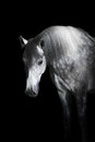 Grey Horse On The Black Background Royalty Free Stock Images - 49213609
