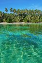 Beach With Lush Vegetation And Clear Water Stock Photos - 49256913