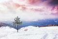 One Pine Tree On The Snow-covered Mountain At Sunset Stock Image - 49270691