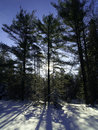 Trees Casting Shadows On Snow Stock Photography - 4931122
