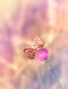 Two Butterflies On The Flower Stock Images - 49315174