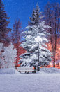 The Winter Evening Stock Image - 49315921