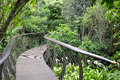 Kirstenbosch Tree Canopy Walkway, The Boomslang Stock Photos - 49327243