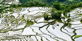 Yuanyang Rice Terrace Royalty Free Stock Photography - 49350267