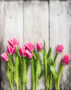 Pink Tulips On Gray White Wooden Wall Background Royalty Free Stock Photos - 49365298