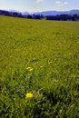 Green Field In Mountains Royalty Free Stock Photo - 4948625