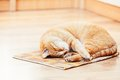 Peaceful Orange Red Tabby Cat Male Kitten Sleeping Royalty Free Stock Photography - 49421117