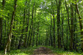 Forest Road Royalty Free Stock Image - 49451396
