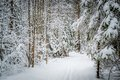 Winter Pine Forest Path Stock Images - 49452734