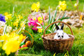 Easter Bunny On Meadow With Basket And Eggs Royalty Free Stock Photos - 49480808
