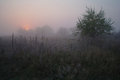 Meadow Near The Woods Covered With Frost Cold Foggy Morning Royalty Free Stock Images - 49489739