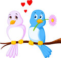 Cartoon Couple Bird On A Branch Royalty Free Stock Photography - 49490857
