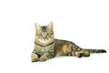 Beautiful Cat Isolated On A White Stock Image - 49491551