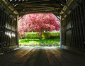 Covered Bridge Royalty Free Stock Image - 49532036