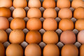 Brown Chicken Eggs Royalty Free Stock Photo - 49536875